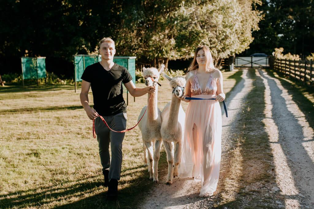 sesja ślubna z alpakami (10)