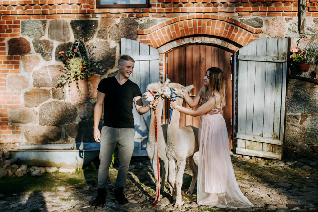 sesja ślubna z alpakami (13)